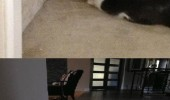 cat dog wall animals talking funny pics pictures pic picture image photo images photos lol