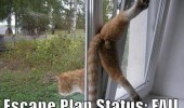 cat lolcat escape fail animal funny pics pictures pic picture image photo images photos lol