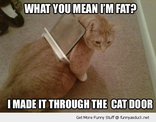 fat cat flap stuck animal lolcat funny pics pictures pic picture image photo images photos lol