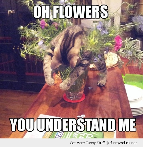 flowers cat lolcat understand me animal funny pics pictures pic picture image photo images photos lol