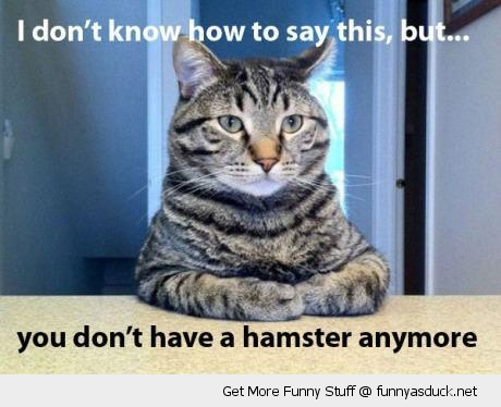 cat hamster anymore lolcat animal funny pics pictures pic picture image photo images photos lol