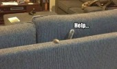 help cat couch sofa lolcat animal funny pics pictures pic picture image photo images photos lol