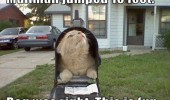 cat in mailbox animal funny pics pictures pic picture image photo images photos lol