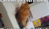 hair on everything cat dryer washer lolcat animal funny pics pictures pic picture image photo images photos lol
