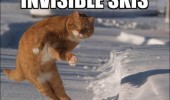 cat invisible skies lolcat animal funny pics pictures pic picture image photo images photos lol