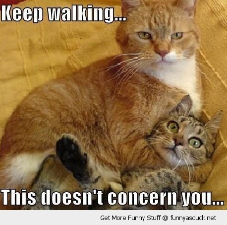 cat lolcat keep walking animal funny pics pictures pic picture image ...