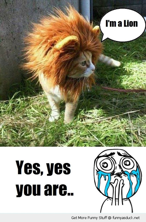 lion cat lolcat meme animal cute funny pics pictures pic picture image photo images photos lol