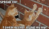 sread em cat lolcat catnip animal funny pics pictures pic picture image photo images photos lol