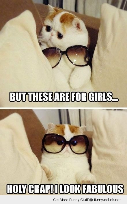 cat lolcat sunglasses girls animal funny pics pictures pic picture image photo images photos lol