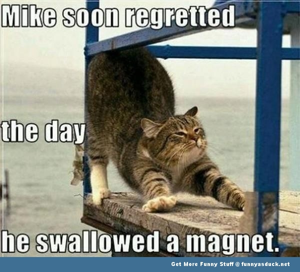 cat lolcat magnet meme animal funny pics pictures pic picture image photo images photos lol
