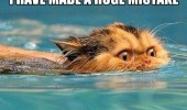 cat water wet huge mistake swimming funny pics pictures pic picture image photo images photos lol