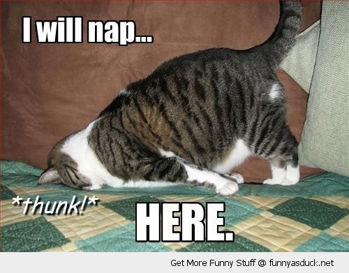 nap here cat animal lolcat funny pics pictures pic picture image photo images photos lol