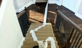 cat stairs lolcat animal toilet paper funny pics pictures pic picture image photo images photos lol