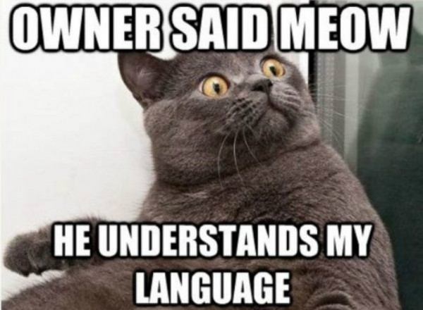 owner said meow cat lolcat animal funny pics pictures pic picture image photo images photos lol