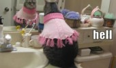oh hell no cat animal pink sweater funny pics pictures pic picture image photo images photos lol