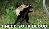 cat rabbit blood vampire animal funny pics pictures pic picture image photo images photos lol