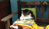 cat reading book tigger lolcat animal funny pics pictures pic picture image photo images photos lol