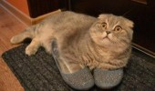 cat shoes lolcat animal funny pics pictures pic picture image photo images photos lol