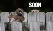 soon cat squirrel animal fence hiding funny pics pictures pic picture image photo images photos lol