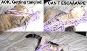cat lolcat wool yarn string stuck animal funny pics pictures pic picture image photo images photos lol