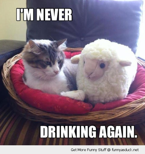 never drinking again cat lolcat animal sheep funny pics pictures pic picture image photo images photos lol