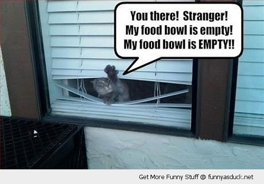 cat lolcat window food bowl animal funny pics pictures pic picture image photo images photos lol
