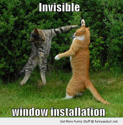 cat lolcat window installation animal funny pics pictures pic picture image photo images photos lol