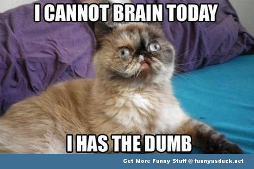 cat lolcat animal dumb funny pics pictures pic picture image photo images photos lol