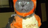 cat tiger tigger meme animal lolcat funny pics pictures pic picture image photo images photos lol
