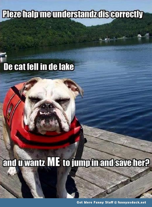 dog animal cat water save lolcat funny pics pictures pic picture image photo images photos lol