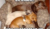 cat dog lolcat animal chair understand us funny pics pictures pic picture image photo images photos lol