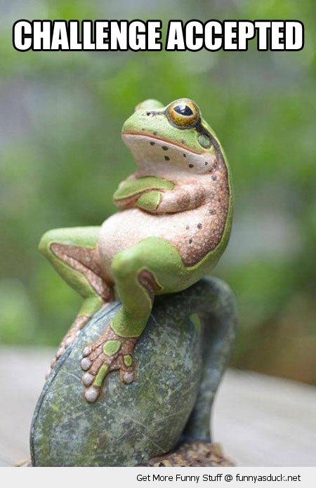 challenge accepted frog animal grumpy arms crossed funny pics pictures pic picture image photo images photos lol