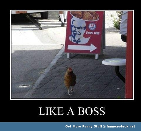 chicken bird kfc meme like a boss funny pics pictures pic picture image photo images photos lol