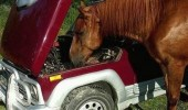 chill out bro horse power car animal funny pics pictures pic picture image photo images photos lol