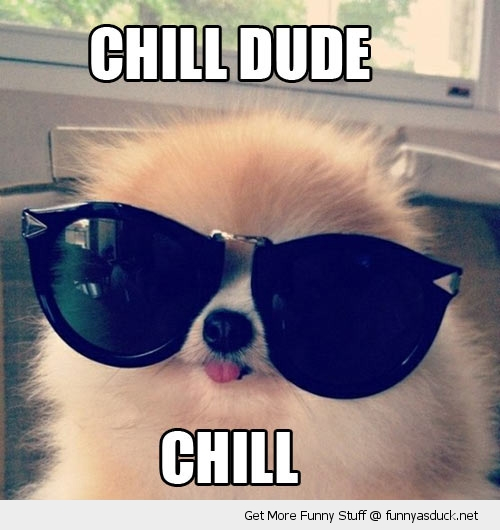 chill dude dog sunglasses animal funny pics pictures pic picture image photo images photos lol