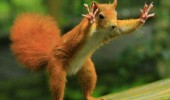 chill squirrel animal tree hands up funny pics pictures pic picture image photo images photos lol