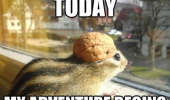 my adventure chipmunk animal nut helmet funny pics pictures pic picture image photo images photos lol