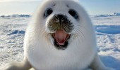 clubbing sounds like fun seal pup animal funny pics pictures pic picture image photo images photos lol