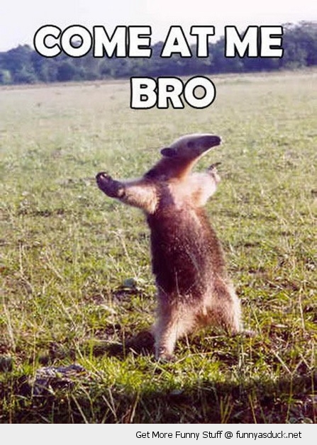 come at me bro anteater animal funny pics pictures pic picture image photo images photos lol