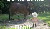 naked kid baby cow cowboy hat come at me animal funny pics pictures pic picture image photo images photos lol