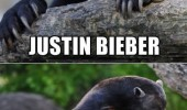confession bear meme justin beiber animal funny pics pictures pic picture image photo images photos lol