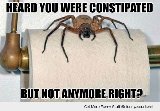 constipated spider toilet roll insect funny pics pictures pic picture image photo images photos lol