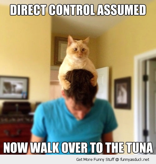 cat on head direct control tuna animal lolcat funny pics pictures pic picture image photo images photos lol