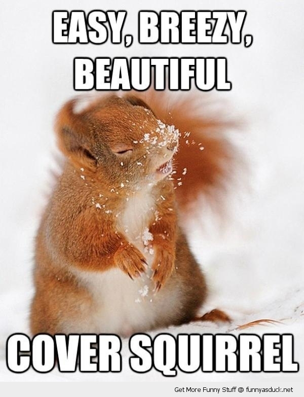 cover squirrel snow animal funny pics pictures pic picture image photo images photos lol