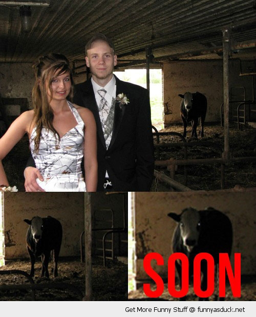 cow in barn couple soon animal funny pics pictures pic picture image photo images photos lol