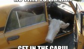 car cow get in animal funny pics pictures pic picture image photo images photos lol