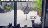 stork crane bird cats children lolcats funny pics pictures pic picture image photo images photos lol