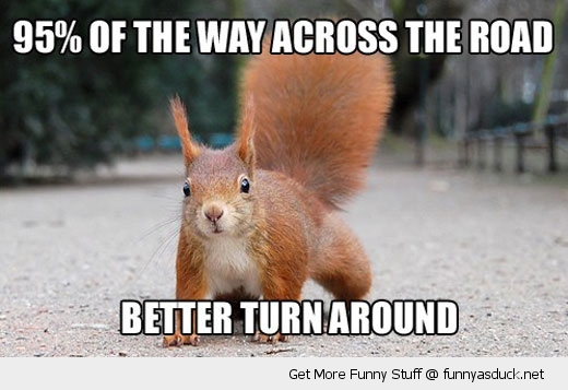 squirrel road turn around animal funny pics pictures pic picture image photo images photos lol