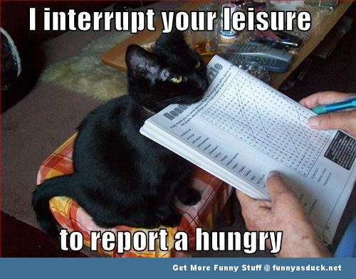 cat lolcat meme hungry animal funny pics pictures pic picture image photo images photos lol