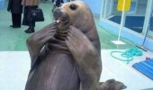 funny-cutest-dress-seal-pics